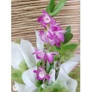 Orquídea Dendrobium no cachepô 24091218