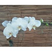 Orquídea Phalaenopsis 1HA Branca