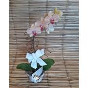 Orquídea Phalaenopsis Peach 1H no cachepô