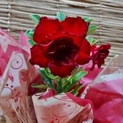 Rosa do deserto dobrada vermelha