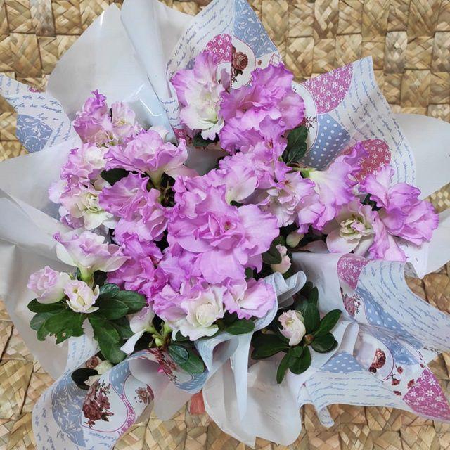 Azaléia lilás no cachepô