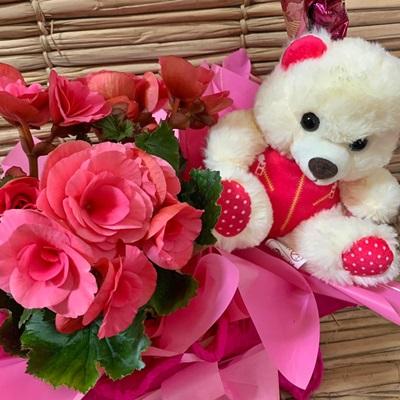 Cesta com Mini begônia cor de rosa, urso de pelúcia e chocolates