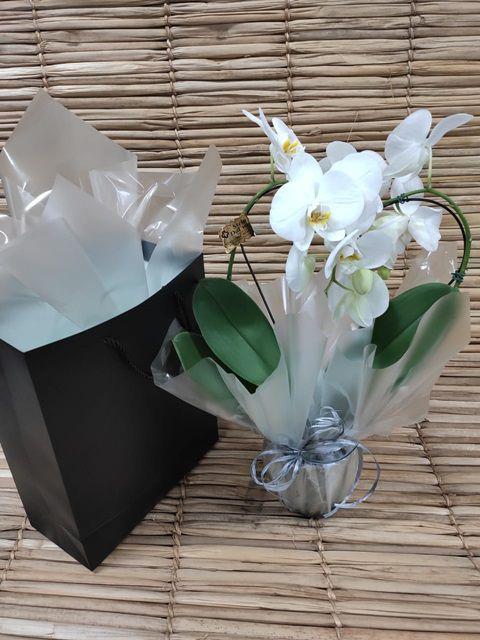 Orquídea Coração Phalaenopsis 1H branca