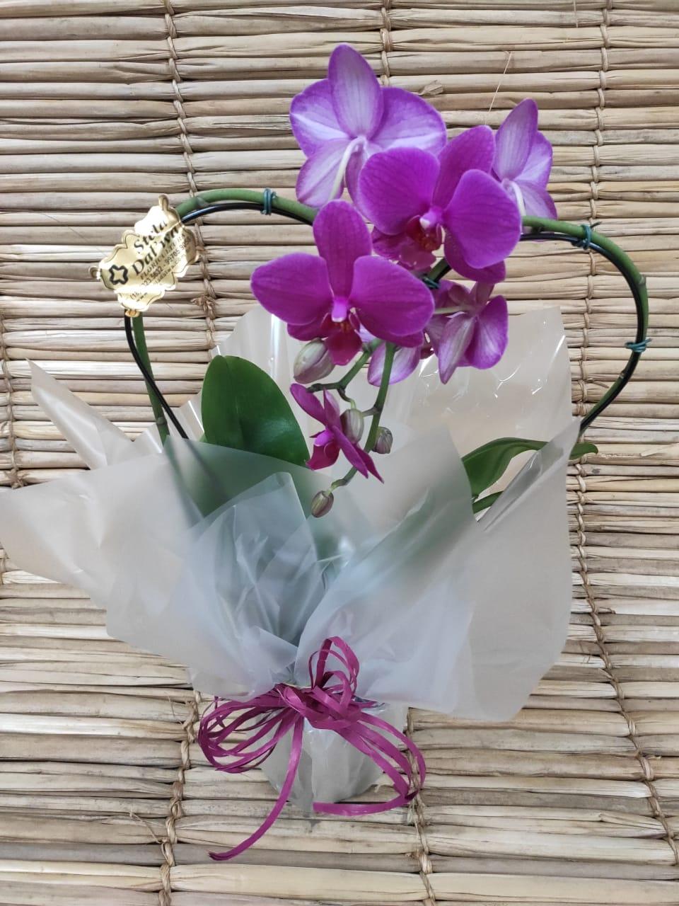 Orquídea Coração Phalaenopsis 1H pink