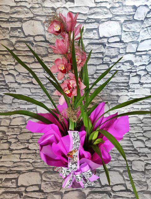 Orquídea Cymbidium 1 1905205001 haste no cachepô