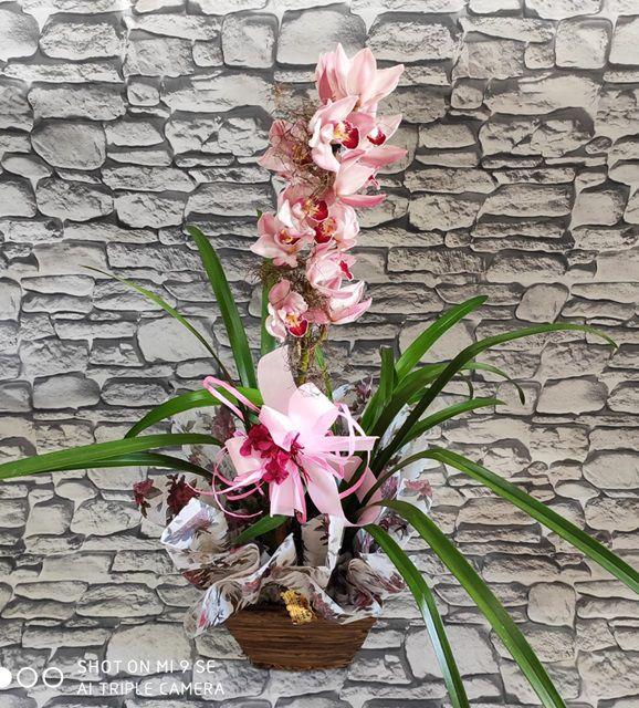 Orquídea Cymbidium cor de rosa 1 haste no cachepô
