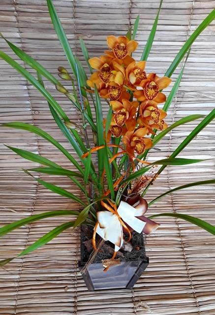 Orquídea Cymbidium Dourado 3 haste no cachepô