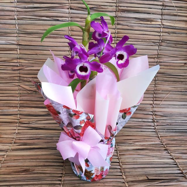 Orquídea Dendrobium PT-15