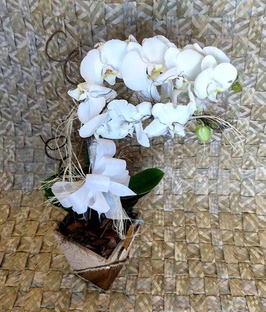 Orquídea Phalaenopsis 2HA Branca