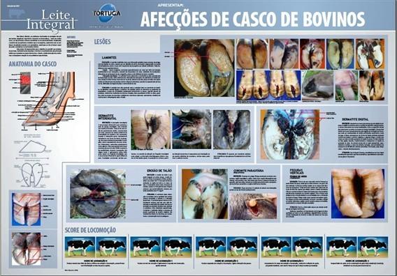 Pôster Afecções de Casco de Bovinos