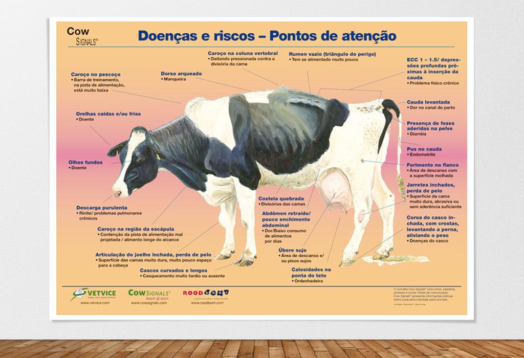 Pôster Vaca Doente - Doenças e riscos – Pontos de atenção