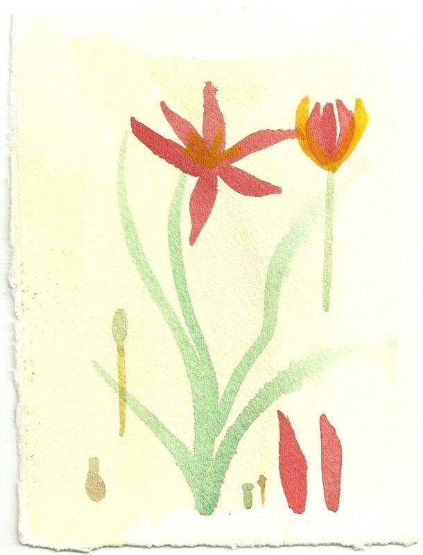 Claudia Proushan - Tulipa Encantada