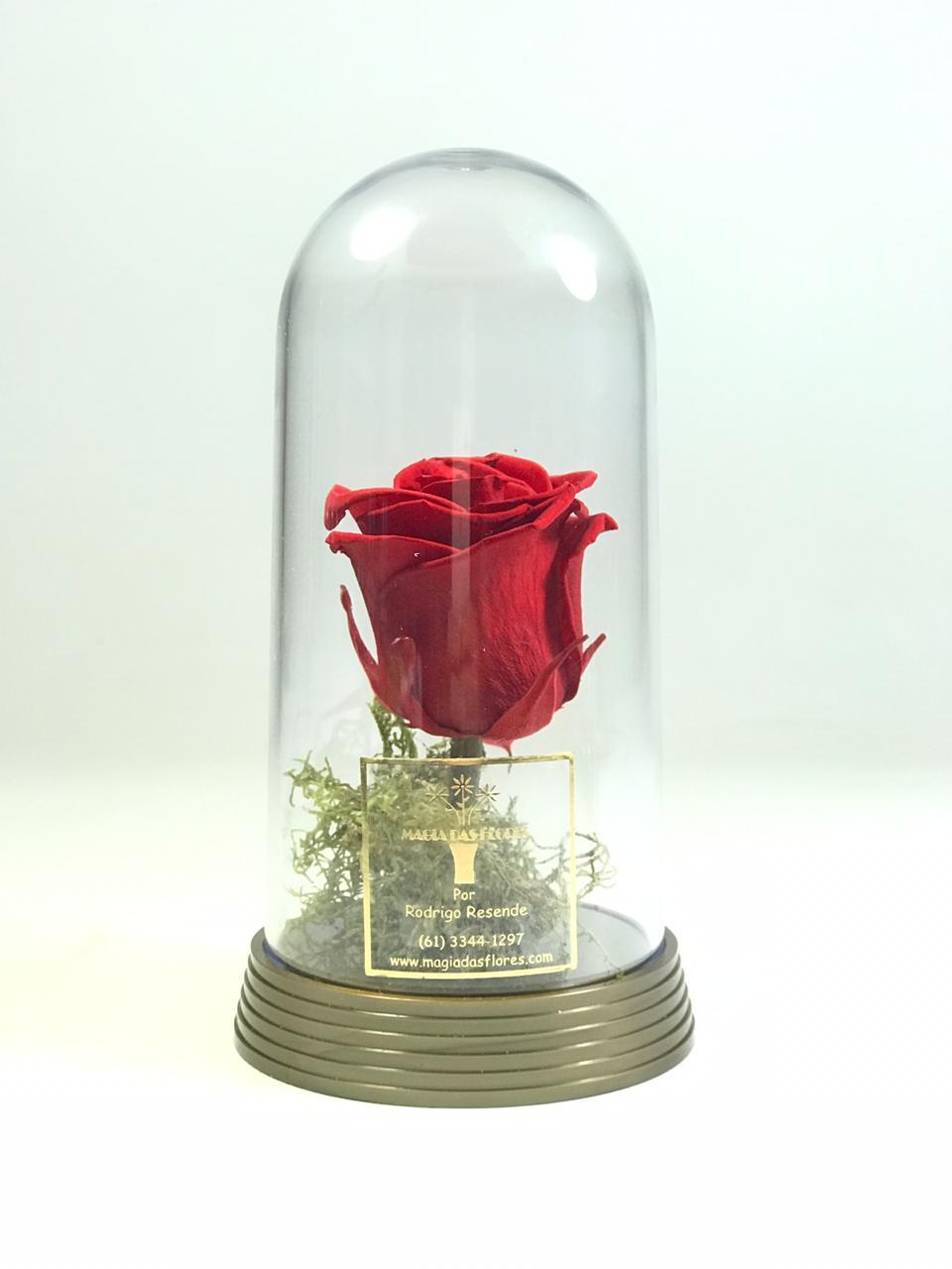 Rosa preservada ou rosa eterna