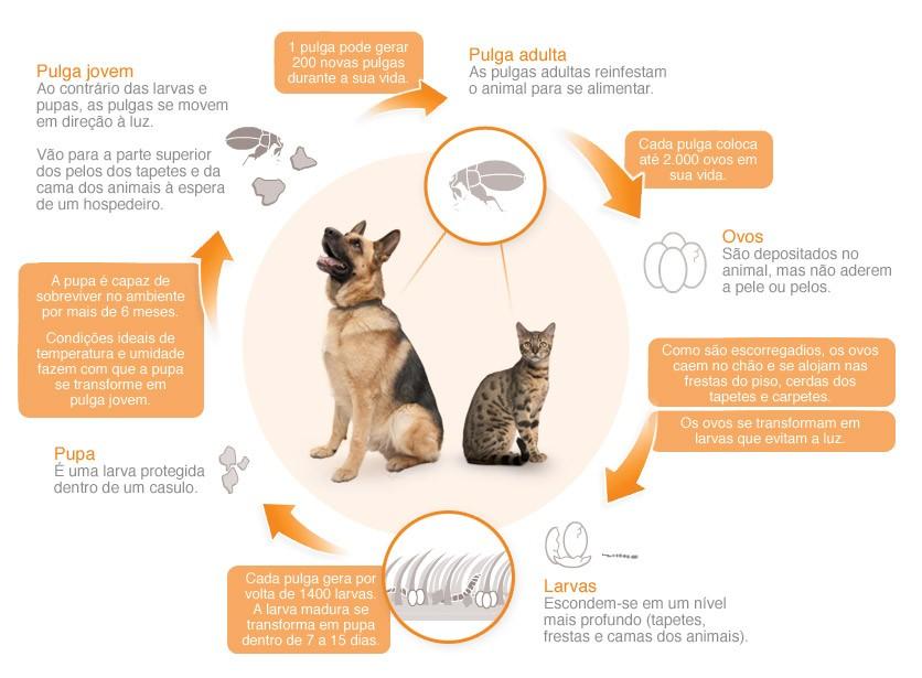 Anti Pulgas e Carrapatos Revolution   - Shoppinho Animal