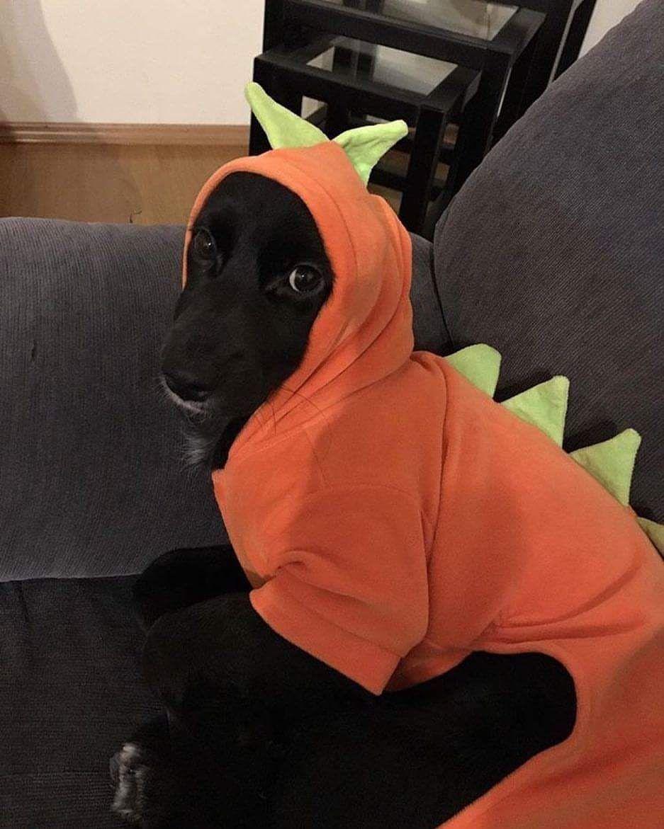MACACÃO DINO  - Shoppinho Animal