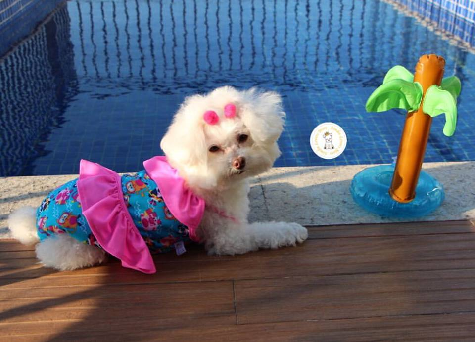MAIÔ  - Shoppinho Animal