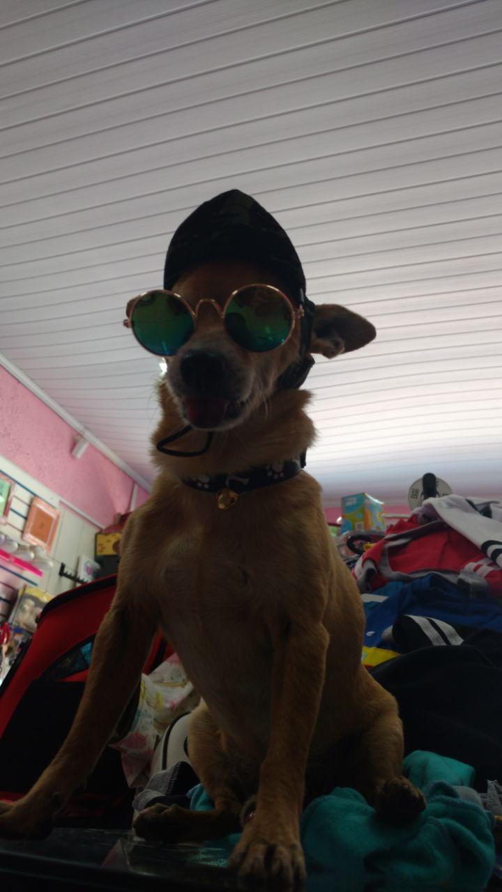 ÓCULOS DE SOL  - Shoppinho Animal