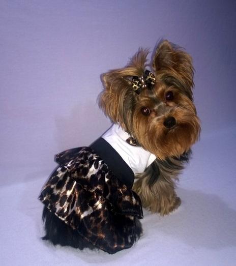 Vestido Diva  - Shoppinho Animal