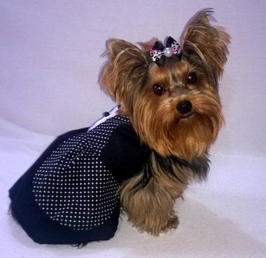 Vestido Pop- Preto  - Shoppinho Animal