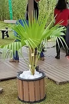 Cachepot Redondo em Madeira Plastica 50×40 Ipê