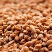Malte Best Malz - Wheat Malt (Trigo claro) - Saca - 25kg