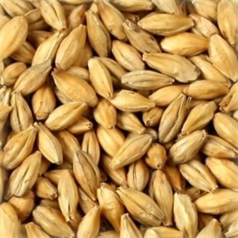 Malte Agrária Pilsen - 1kg
