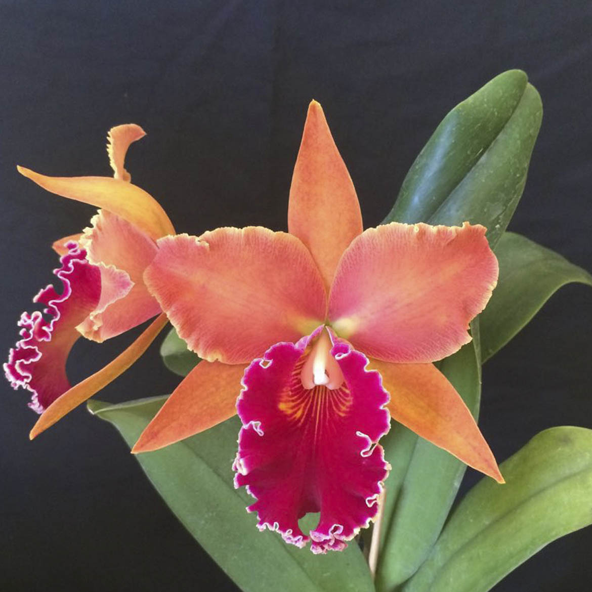 "Blc. chia lin ""New City"" AM/AOS X Blc. chunyeah ""Good Life"" AM/AOS"
