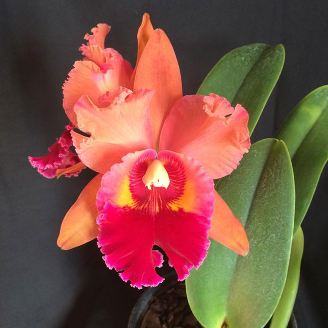 Blc.Chunyeah ''Good Life'' AM/AOS X Blc Chia lin ''New city'' AM/AOS