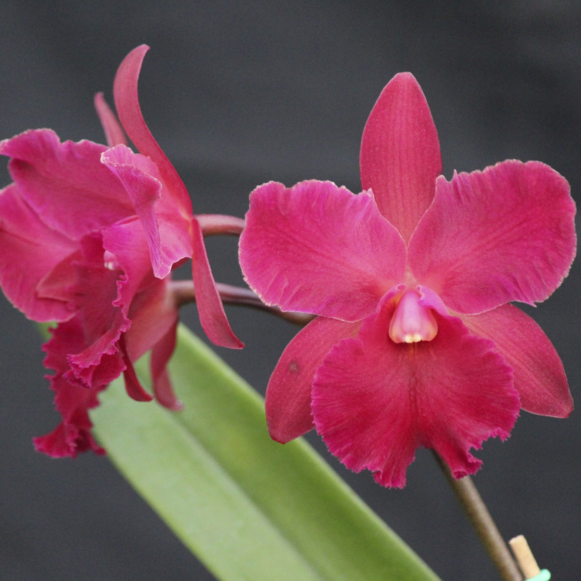 "Pot. sally taylor ""Red"" HCC/AOS X Ctna. keith roth"