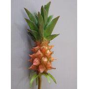 Abacaxi ornamental - valor unitário