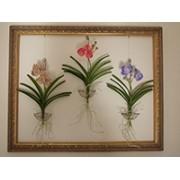 Curso online Orquídeas Vanda