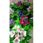 Curso online Violetas