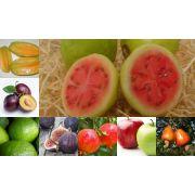 Workshop Frutas 19/10
