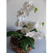Workshop Orquídea Phalaenopsis SP