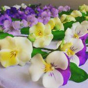 Workshop Viola tricolor - Amor perfeito variados