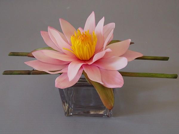 Flor de Lótus - Nymphaea lotus