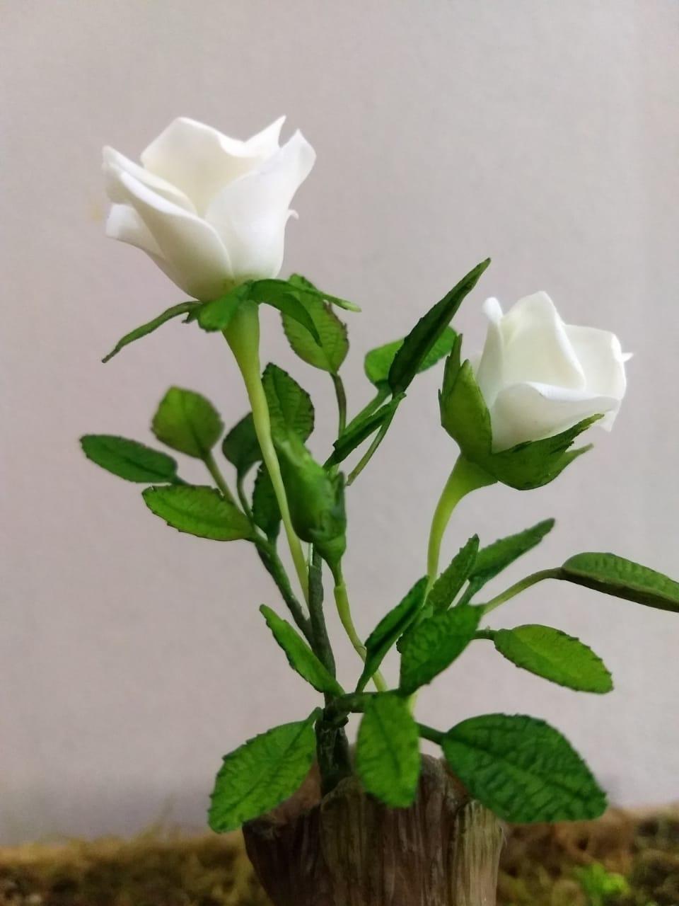 Míni- rosas