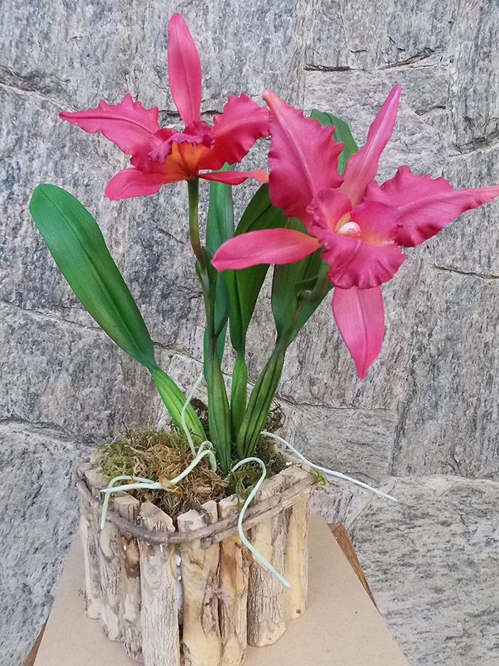 Cattleya variada