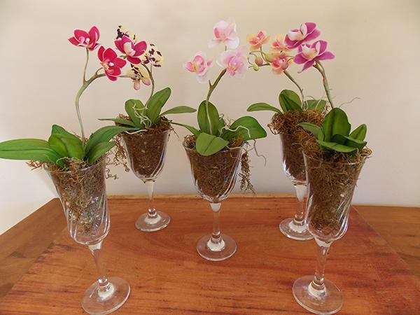 Phalaenopsis míni