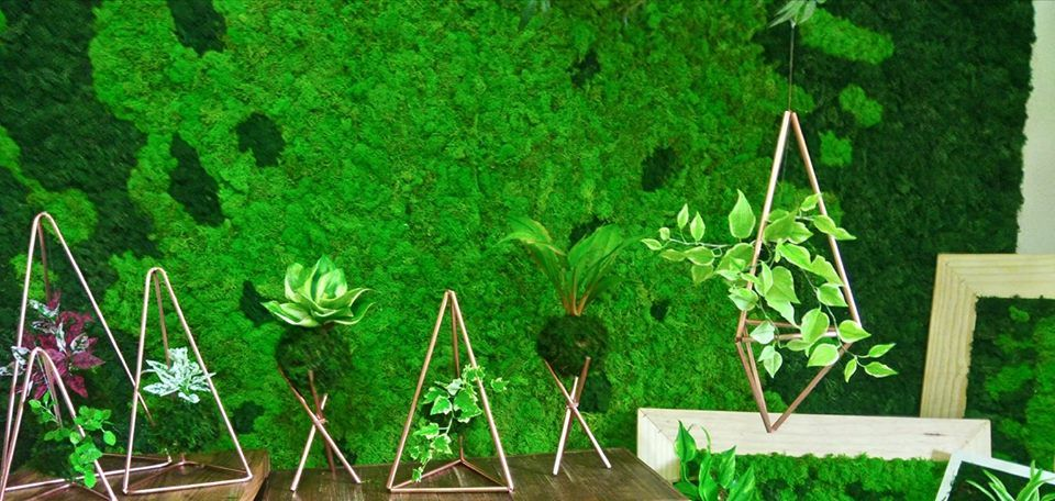 Projeto Mundo Verde parte 2 - Kokedamas