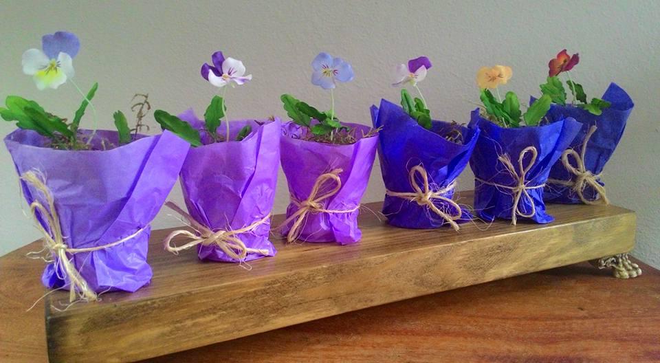 Viola tricolor - Amor perfeito variados