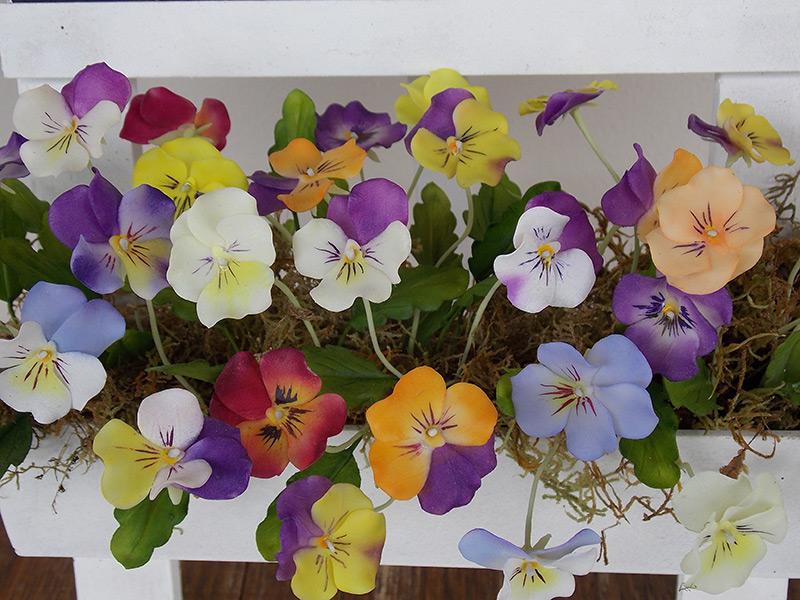 Viola tricolor variados- Amor perfeito variados
