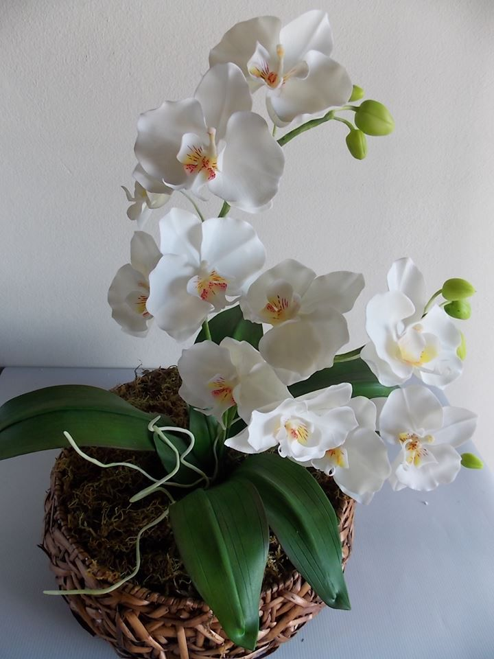 Workshop Orquídea Phalaenopsis SP