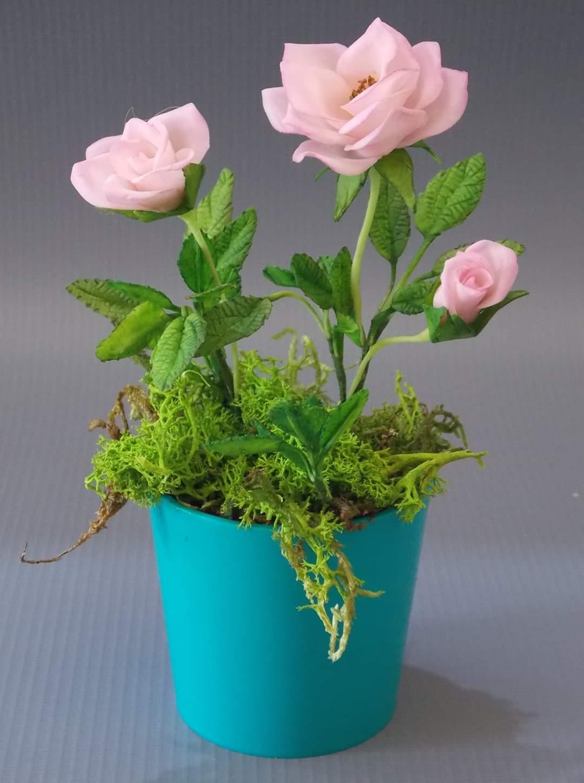 Workshop SP Mini- rosas