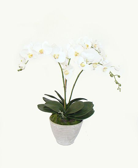 Orquídea Phalaen Branca x3 com Vaso Cerâmica (A)