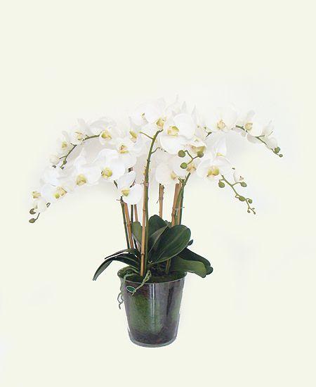 Orquídea Phalaen x6 com Vaso de Vidro (A)