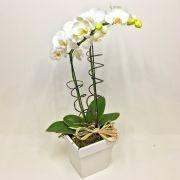 Orquídea Phalaenópsis Branca