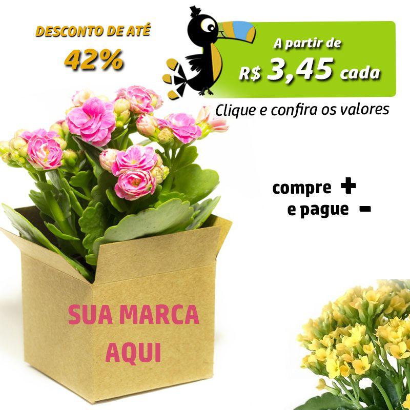 Flor da Fortuna no Cachepot - Kalanchoe - Ref.0014831