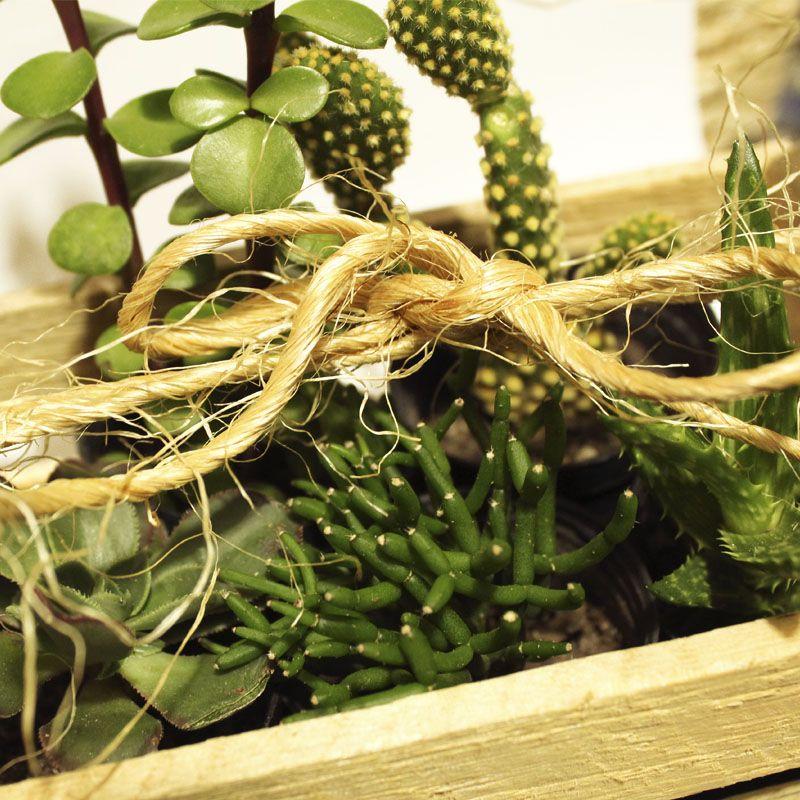 Kit Suculenta no Caixote com 5 vasos - Ref.0014790