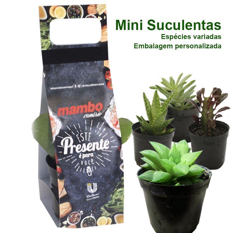 Mini Suculenta Embalagem com Alça Cromia - Ref.0014789